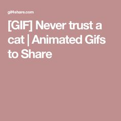 [GIF] Never trust a cat | Animated Gifs to Share