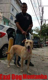 TAXI DOG MONTANHA TRANSPORTE DE ANIMAIS NO RIO DE JANEIRO: JADE partiu ! SER ADOTADA... E o Taxi Dog Montanha...