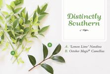 Perfect Pairs - Distinctly Southern: Lemon Lime Nandina and October Magic Camellias Lemon Lime Nandina, New Growth, Plant Care, Plant Leaves, Southern, October, Herbs, Pairs, Magic