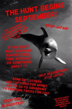 THE SLAUGHTER BEGINS SEPTEMBER! What are YOU going to do about it besides reading and pinning?! You can make a difference... Or sit on the couch, it YOUR choice! - Wildlife Earth on Pinterest, fighting for marine wildlife rights!