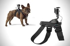 Fetch Dog Harness go pro accessories
