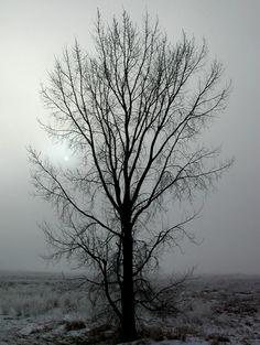 In a North Dakota winter even the fog freezes.