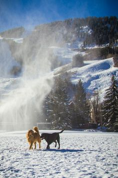 #Aspen dogs love the winter!