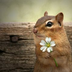 Next week on- 'The Bachelor: The squirrels have their say'... (for more Animal Antics: http://pinterest.com/popeggs/)