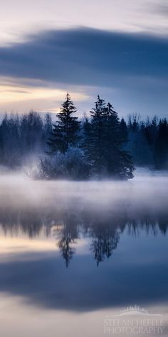Winter Mist around the Evergreens