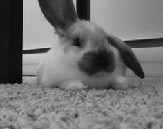 Helicopter Bunny Relaxes - September 26, 2011