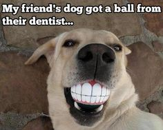 """""""My friend's dog just got a ball from the dentist..."""" ~ Dog Shaming shame - LOL"""