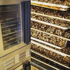I Farm Crickets, The Future Of Human Food: 7 Insane Truths