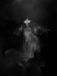 dark wings #faerie