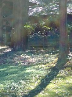 諏訪大社 本宮