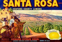Santa Rosa Lemons, Oxnard, Ventura, California