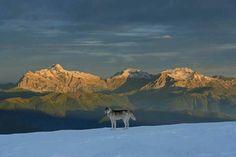 Adygea (north of the Caucasus Montains), Russia.