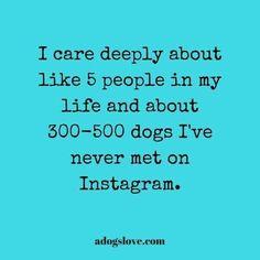 actually, any dog i see.