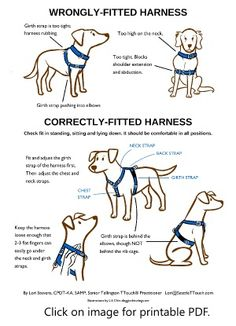 How to make sure your dog harness fits correctly.