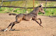Cute Foal. ♥