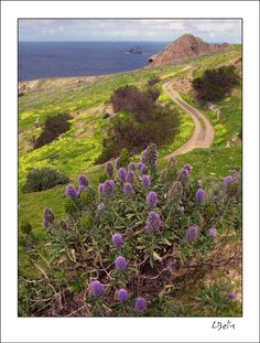 This photo from Madeira, Islands is titled 'Searching for springtime'. Portugal, Cool Landscapes, What A Wonderful World, Lisbon, Portuguese, Wonders Of The World, Searching, Paths, Islands