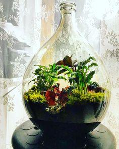 Mistic Falls, Plants In Bottles, Moss Garden, Terrarium Diy, Vivarium, Water Plants, Houseplants, Bonsai, Mystic