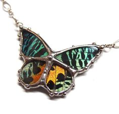 Real Wildlife Jewelry Madagascan Sunset Moth Necklace by neile