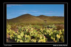 Uno de los valles escondidos de Parras, Coahuila.