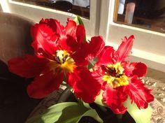 Flowers Flowers, Plants, Florals, Planters, Flower, Blossoms, Plant, Planting