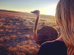 There is something else to do than taking pictures of animals in Australia ?  (By wild animal I m not talking about me ofc ) #digitalnomad #nomadlife #wanderlusting #wanderlust #travel #traveler #travelbug #instatravel #instatraveling #visit #visiting #traveling #trip #instago #tourism #tourist #photooftheday #travelingram #travelphoto #travelphotography #worldcaptures #exploretheglobe #wonderful_places #picoftheday #traveladdict #exploretheworld #wonderfulplaces #australia #wildlife by…