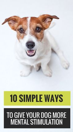 10 Fun Brain Games for Dogs.