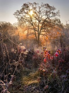 Autumn story: oak, raspberry and Frost / image by Alexander Kitsenko Landscape Photos, Landscape Photography, Nature Photography, Photography Awards, Family Photography, Beautiful World, Beautiful Places, Beautiful Pictures, Hello Beautiful