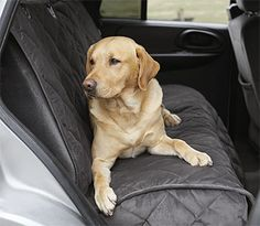 The 23 Best Orvis Dog Accessories Images On Pinterest Dog
