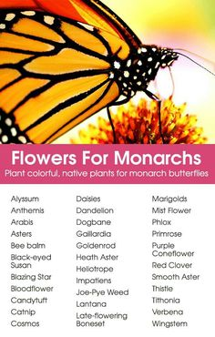 Plant colorful, native plants for monarch butterflies! Plant colorful, native plants for monarch but