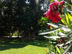 #jardín #careva