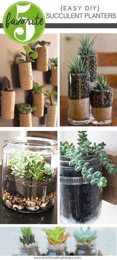 Spruce up either your home either indoors or outdoors with these Easy DIY Succulent Planters you can make on a frugal budget.