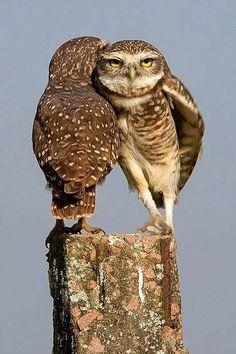 foto van I Love Owls.