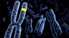 Eu Quero Biologia: Sexo homogamético e heterogamético