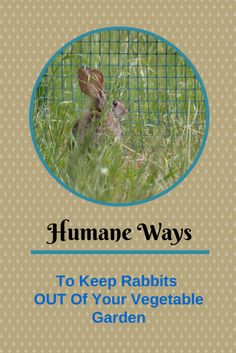 How to naturally and safely keep rabbits out of a garden - How to keep rabbits out of a garden ...