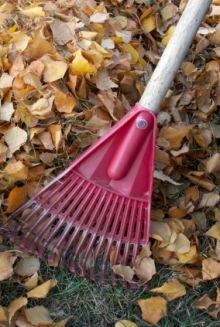 Fall and Winter Garden Cleanup Tips - these are for winters colder than what we . - Fall and Winter Garden Cleanup Tips – these are for winters colder than what we usually see here - Garden Rake, Garden Tools, Garden Ideas, Outdoor Plants, Outdoor Gardens, Fall Clean Up, Winter Hacks, Winter Tips, Fall Winter