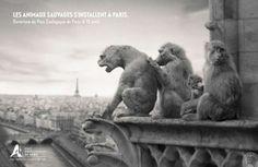 Publicis Conseil et Ubi bene pour Parc zoologique de Paris - avril 2014 Support Print