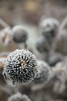 I grey l Out Of Focus, 50 Shades Of Grey, Fifty Shades, Seed Pods, Autumn Day, Fauna, Winter Garden, Bokeh, Grey And White