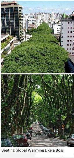 """This is a street called """"Rua Gonçalo Carvalho"""", located in Porto Alegre, Brazil. In 2005, despite plans to cut some of the trees down in favour of a parking garage, local community and the Gonçalo de Carvalho organisation prevented this from happening.    In 2006, this forest in the shape of 500 meter long """"green tunnel"""" was named a historical, cultural, ecological and environmental heritage of the city."""