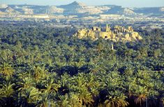 Cairo Safari Tours to Siwa Oasis - Cairo Holidays Packages.