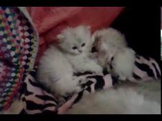 62 Videos De Mis Gatos Gatos Perros Perro Gato