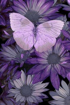 """""""Purple Butterfly"""" ~ By JQLicensing on Fine Art America Purple Love, All Things Purple, Purple Rain, Shades Of Purple, Purple Stuff, 50 Shades, Butterfly Painting, Butterfly Flowers, Blue Butterfly"""