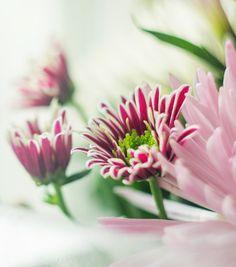 #spring #morning #photo #nature #flowers #nikon #d7100