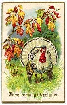 Vintage Thanksgiving Clip Art - White Turkey - The Graphics Fairy