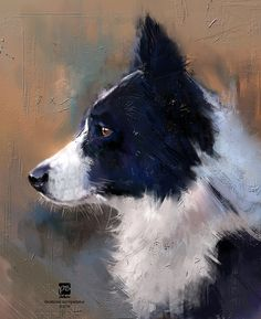 Border collie, psdelux ... on ArtStation at https://www.artstation.com/artwork/XO88R