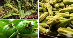 Quem tem diabetes ou quer prevenir essa terrível doença precisa consumir estas plantas.