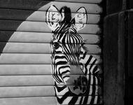 """Les murs nous délibrent des messages intemporels, des signaux éphémères qu'il convient de décripter, de comprendre ou simplement d'apprécier.  Par contre, il ne faut pas les rater ! Cet """"art sauvage"""" disparait souvent assez rapidement pour laisser la place à d'autres artistes, graffeurs ou pochoiristes."""