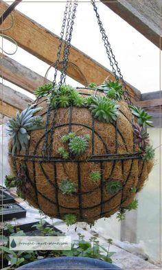 Punctuate your garden with a Succulent Sphere; make your own globes or orbs planted with Sempervivum & succulents for a unique garden craft; simple to make and plant...