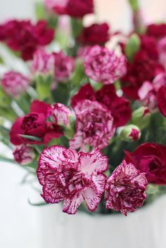 A Bunch for the Weekend-#105-Two Different Carnations-Ingrid Henningsson-Of Spring and Summer