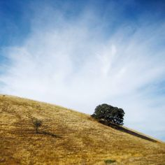 On the slope #yellow #hill #lonetree #clouds #tree