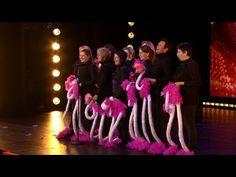 Bende struisvogels doet The Harlem Shake!